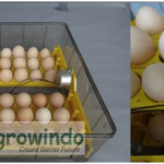 Jual Mesin Penetas Telur 96 Butir Otomatis – AGR-TT96 di Yogyakarta