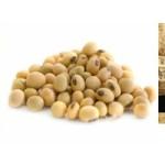 Jual Mesin Pulp Grinder Pembubur Kacang-Kacangan di Yogyakarta